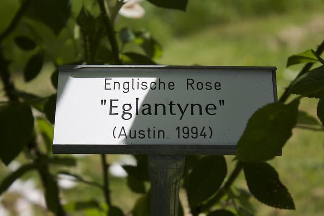 englische rose eglantyne austin 1994 flickr photo sharing. Black Bedroom Furniture Sets. Home Design Ideas