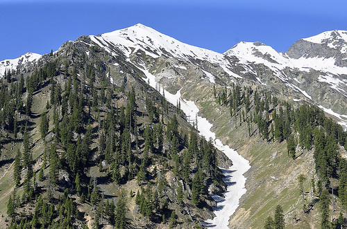 travel pakistan mountains nature photography nikon glaciers northernareas pinetrees chitrak lowaritop khyberpakhtunkhwa asimnisarbajwa