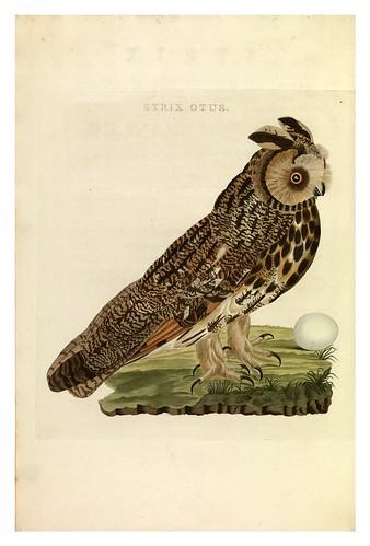 002-Aguila buho- Nederlandsche vogelen- Nationale bibliotheek van Nederland