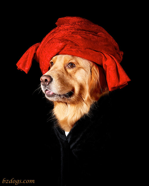 Portrait of Dog in a Red Turban