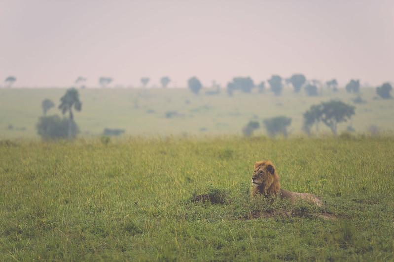 africansafari2014-40