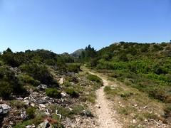 Sentier de la crête Vaccia - Cavalletti : vers Punta Mascaraccia
