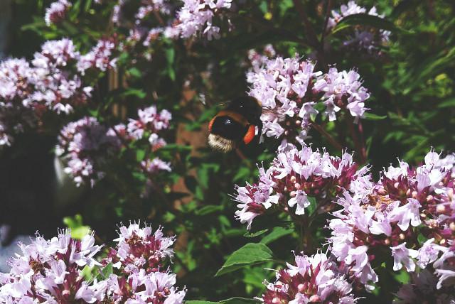 5 how to create bee garden bee friendly plants vivatramp uk lifestyle book blog garden tour