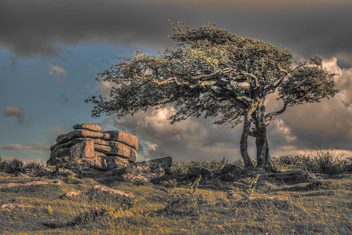 countryside cloudy windy devon windswept granite tor dartmoor hawthorn combestonetor