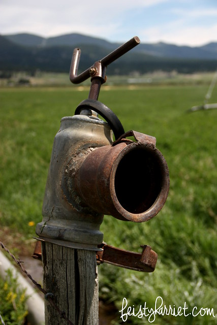 Montana Elkhorn Ranch 1_feistyharriet_July 2014