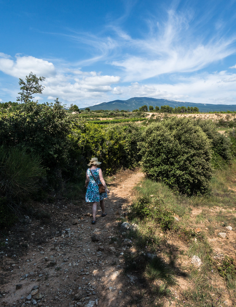 The Path To Bédoin, Provence