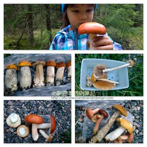 mushroom fb