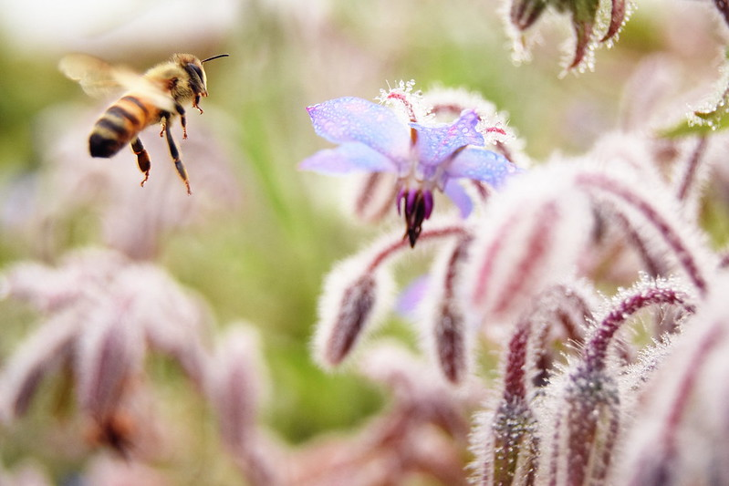 mehiläiset, sumuu, shopping 135