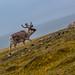 Looking for Santa @ Nordre Isfjorden National Park