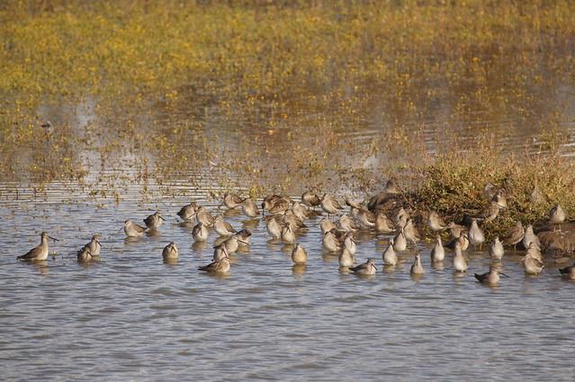 Migratory Bird Sanctuary