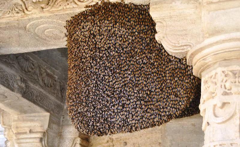 188 panal de avispas en un templo cercano a Natwara (33)