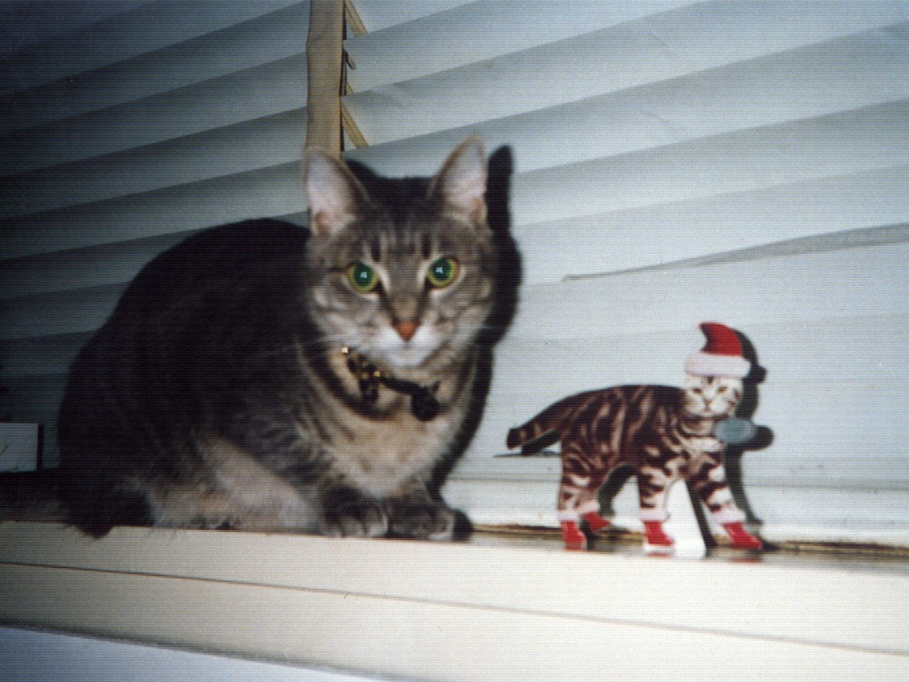 smoggy's second christmas, seen here with a santa cat cut out