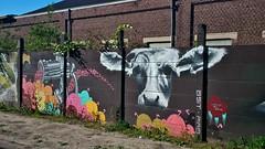 Asit / Heidestraat 06-06-2014