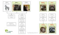 Gorilla Family - Nürnberg 2014