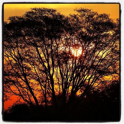 africa travel sunset sun nature canon silhouettes malawi canon5d liwonde liwondenationalpark