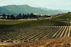 plateau(0.0), terrace(0.0), agriculture(1.0), farm(1.0), field(1.0), soil(1.0), mountain(1.0), valley(1.0), plain(1.0), hill(1.0), landscape(1.0), rural area(1.0), vineyard(1.0), plantation(1.0), mountainous landforms(1.0),