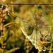 Web by ewagientka