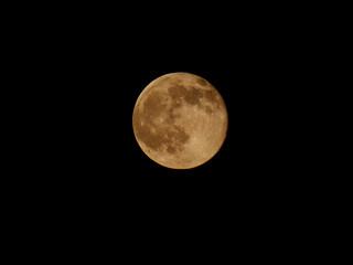 The Honey Moon