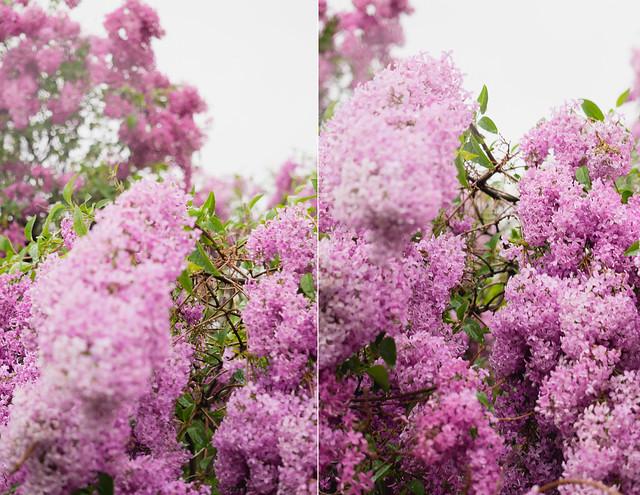 flowerblog1