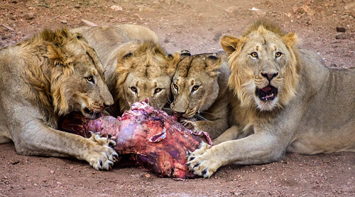Royal Feast #WildlifeWednesday