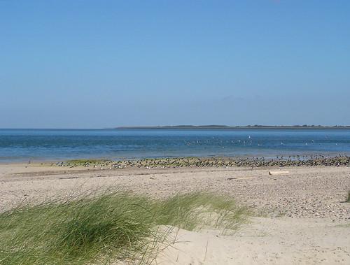 Amrum Strand Nordsee Vöglekolonie