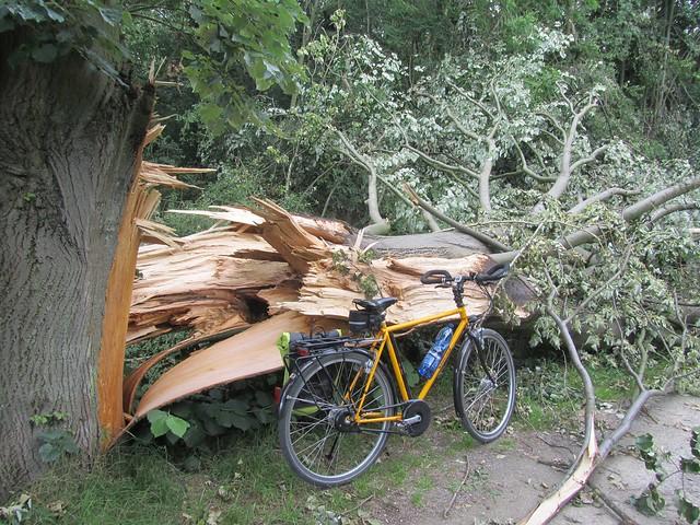 Doch überall noch explodierte Bäume