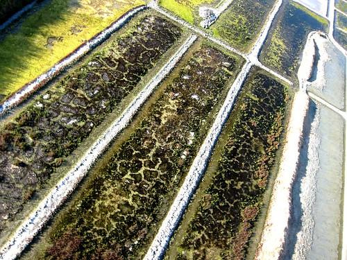 de nouvelles photos aériennes des marais salants de Guérande 14464193301_c815428b28