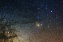 Sequoia Stars
