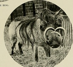 """Image from page 332 of """"Animal Life and the World of Nature; A magazine of Natural History"""" (1902)"""