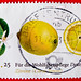 beautiful stamp Germany 55c + 25c charity (lemon, Citronnier, limone, Zitrone,  ليمون  citrus limon, Limão, レモン, el limonero, 柠檬, Citrom, Лимон) poste timbres Allemagne sellos Alemanha selos porto franco francobolli Germany postzegel 우표 독일 유럽 sellos 55c