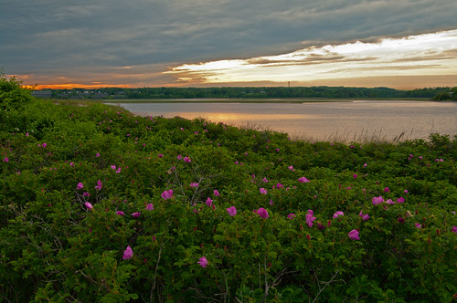 sunset spring maine newengland wells coastal drakesisland rosarugosa beachroses searoses wellsme