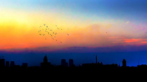 sunset birds silhouette egypt azharpark