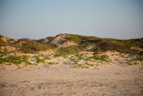 Sand Dune on Padre Island National Seashore