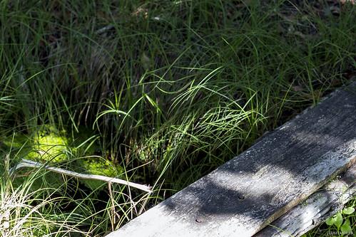 La fontaine n'est rien d'autre une source, signalée ici par une planche de bois.