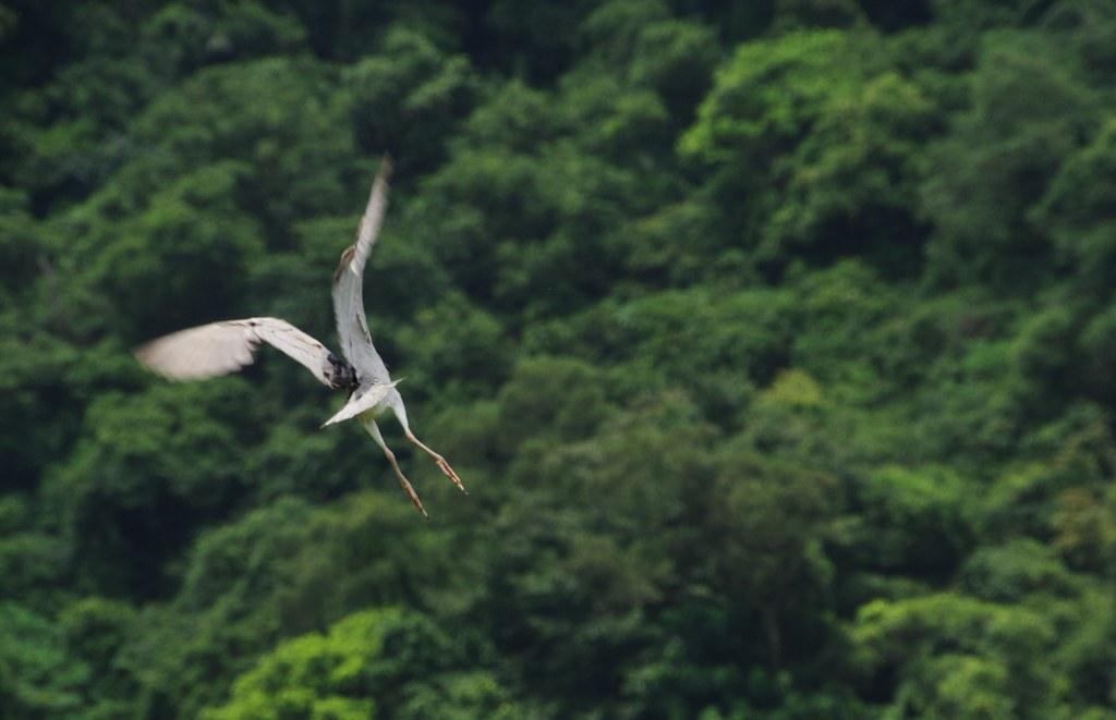 宜蘭梅花湖.旅遊鏡打鳥
