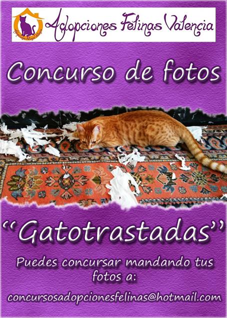 7º Concurso fotográfico: GATOTRASTADAS 14882290763_9c95f56c7a_o