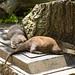 Otters Asleep