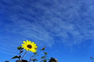 The clear autumn sky (The flower in commuting 2014/09 No.6.).