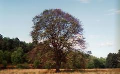 è un po' difficile accorgersene, ma sotto l'albero c'è Andrè.