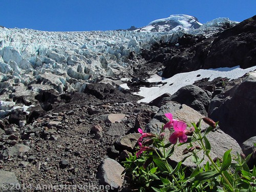 Glaciers and Wildflowers from Heliotrope Divide, Mount Baker-Snoqualmie National Forest, Washington