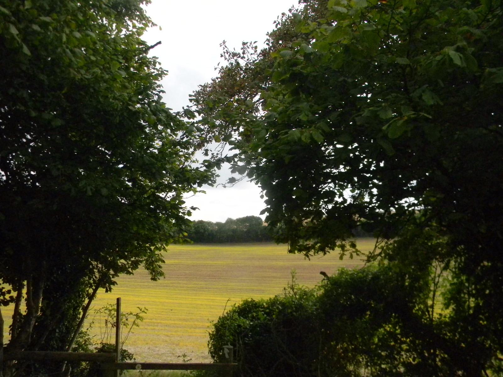 Stripey field - aproaching Radnage Saunderton via Bledlow