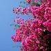 Flower Essence, Pylos, Greece by Dimitris Karkanis