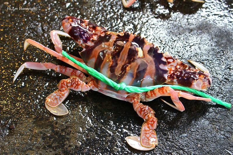 西北萬里蟹 (70)
