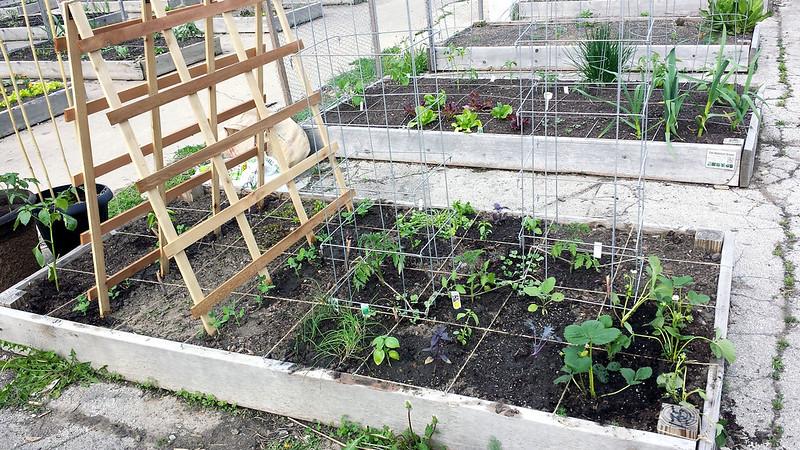 5-20-14 garden