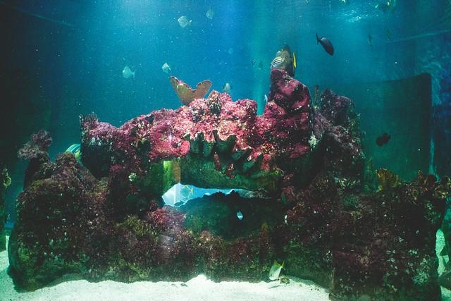 Bluereef Aquarium Tynemouth