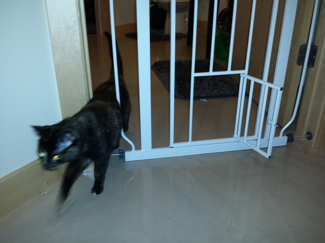 Baby Gate Cats Can Fit Through