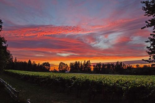 sunset nature mcmenamins edgefield vinyards