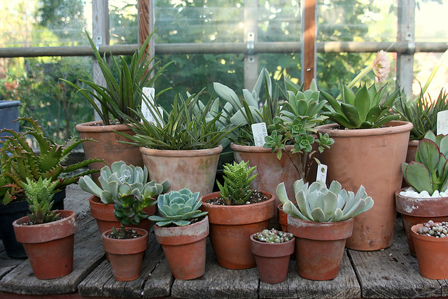 9_greenhouse_succulents