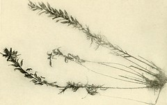 """Image from page 173 of """"A year of Costa Rican natural history"""" (1917)"""