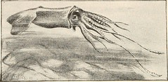 """Image from page 199 of """"The animans and man; an elementary textbook of zoology and human physiology"""" (1911)"""